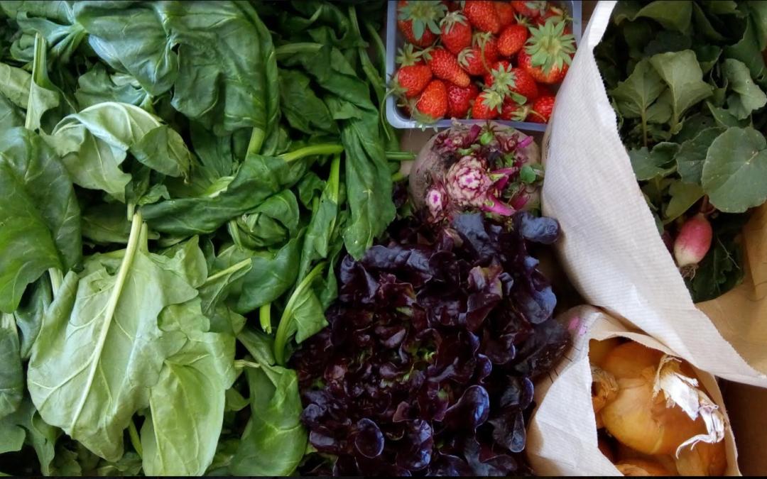 Comment bien conserver vos fruits et légumes bio ?